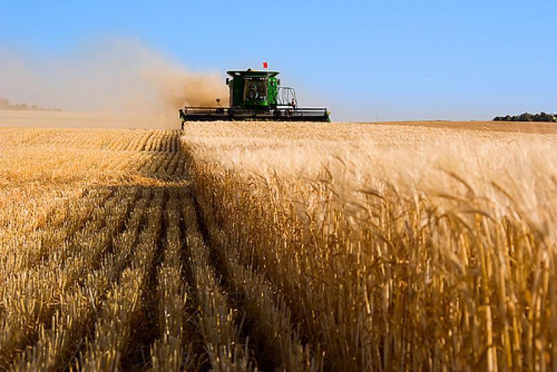 Купить землю в израиле для сельского хозяйства